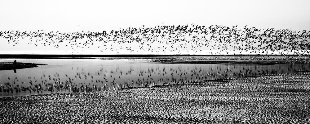 Arctic Terns 7