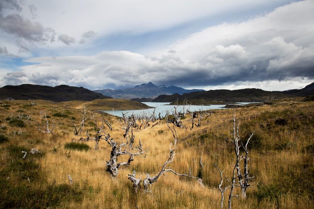 National Park (Patagonia & Atacama)