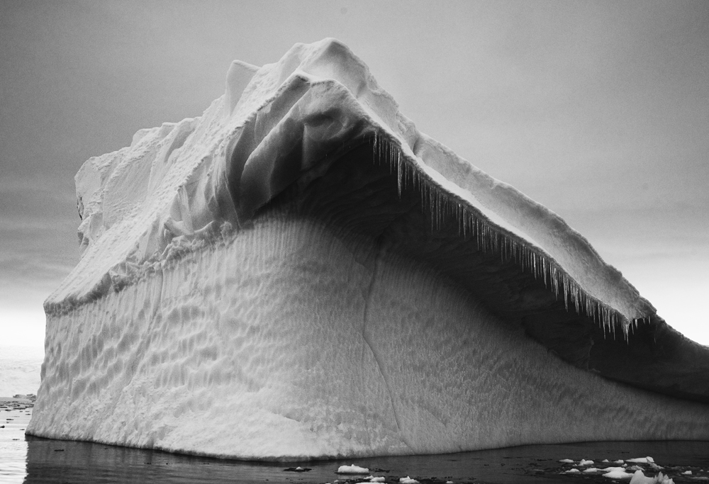 Shark Ice, Antartica, 2012