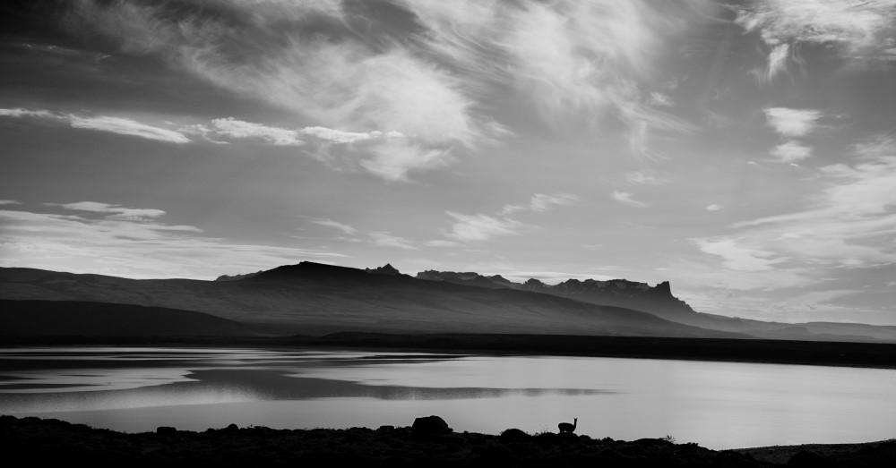 Little Guanaco (Patagonia & Atacama)
