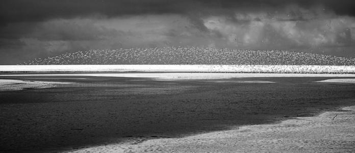 Arctic Terns 6